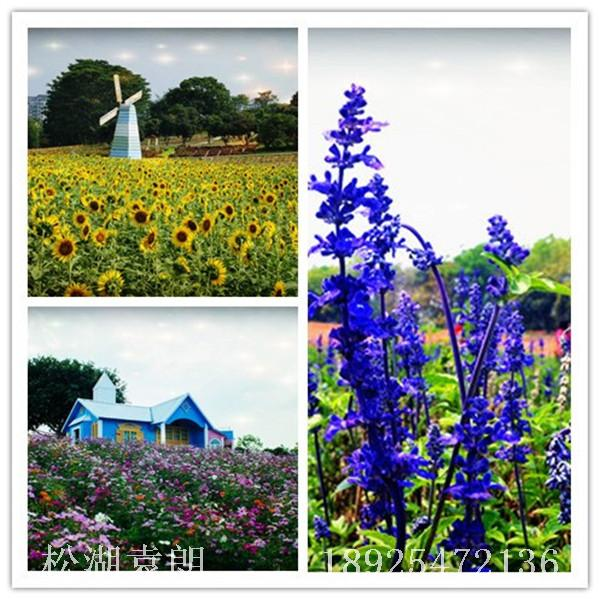 东莞农家乐旅游